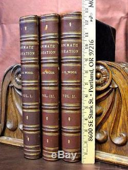 1885 Animate Creation 3 Vol Set Couleur Plaques Folio Illustré Zoologie Histoire