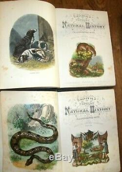 Histoire Naturelle Populaire Cassell Complete 4 Régler Le Volume Avec Des Plaques Colorées À La Main